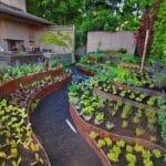 Contoh Tanaman Hortikultura