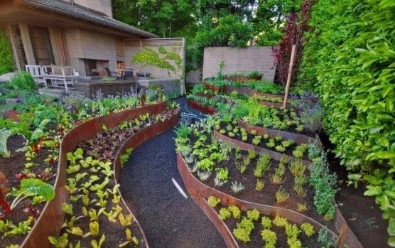 Contoh Tanaman Hortikultura Untuk Rumahan