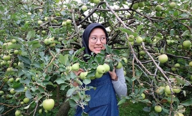 Pengertian Agrowisata, Jenis Agrowisata, Tujuan Agrowisata
