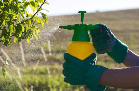 Cara Membuat Pestisida Organik Sederhana