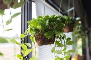 pengaruh suhu terhadap tanaman